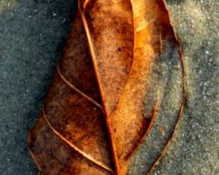 Pawley's Island – Leaf in the Sand 1