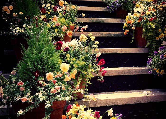 Steps in Bloom